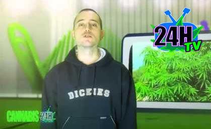 Cannabis24Htv