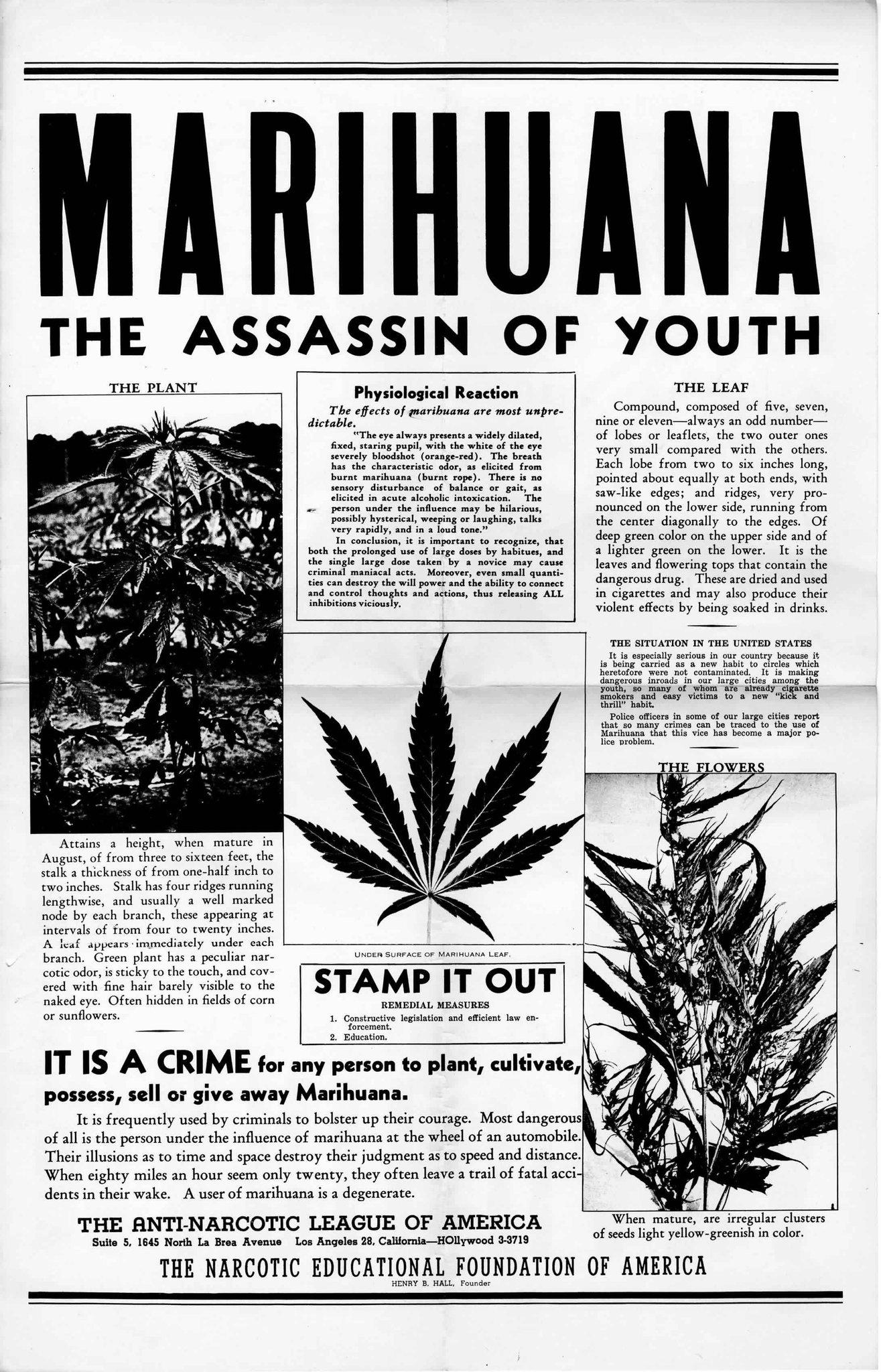 Carteles Vintage Cannabis Marijuana 22
