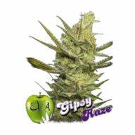Gipsy Haze semillas feminizadas | Eva Seeds