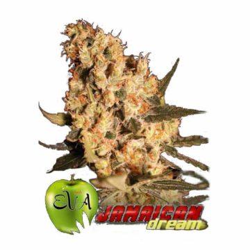 Eva Seeds Jamaican Dream
