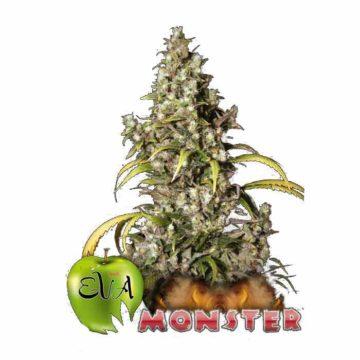 eva-seeds-moster
