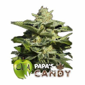 Eva Seeds Papas Candy