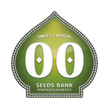 Sweet Critical 00 Seeds 01
