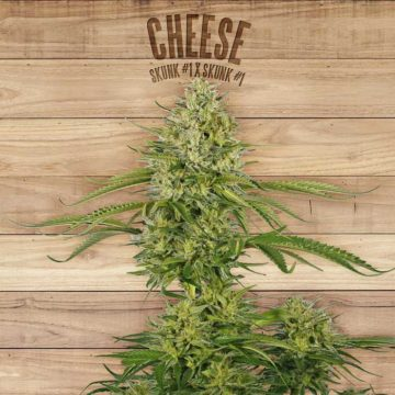 Cheese The Plant Organic Seeds