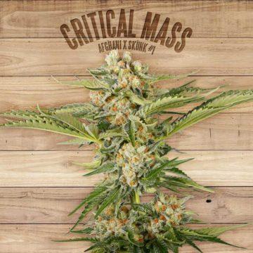 Critical Mass The Plant Organic Seeds