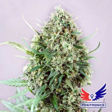 Jack Diesel Positronic Seeds