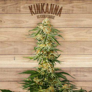 Kinkanna The Plant Organic Seeds