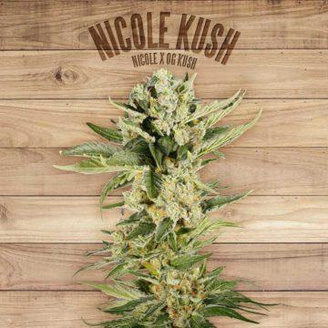 Nicole Kush The Plant Organic Seeds