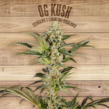 Og Kush The Plant Organic Seeds