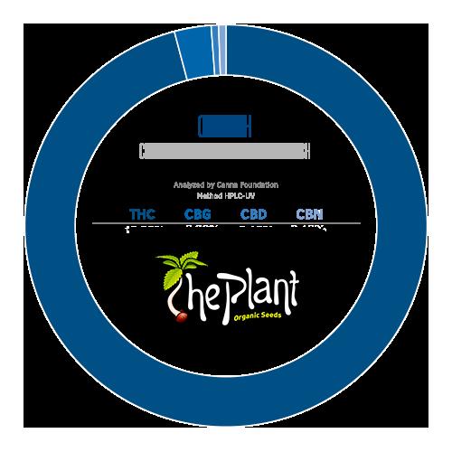 The Plant Og Kush Analitica