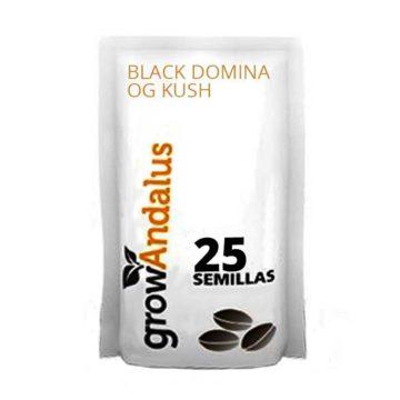 100_semillas_granel_black_domina_og_kush