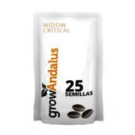 Widow Critical semillas de marihuana a granel (25 semillas) | Grow Andalus