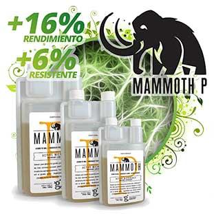 Boletin Abril Mammoth 1