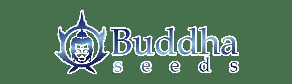 Buddha Seeds CBD