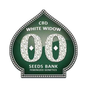 White Widow Cbd 00 Seeds 01