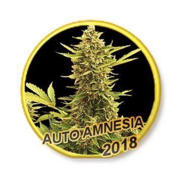 auto-amnesia–mr-hide-seeds-01