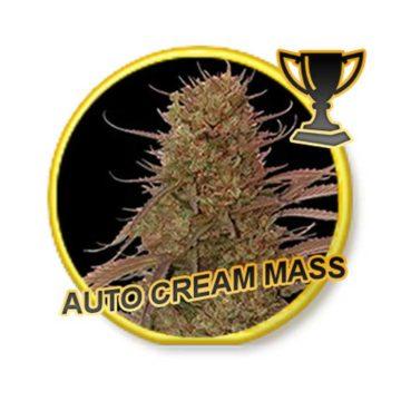 auto-cream-mass–mr-hide-seeds_01