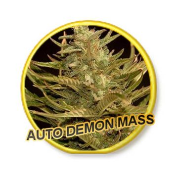 Auto Demon Mass Mr Hide Seeds 01