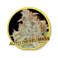 Auto Diesel Mass semillas autoflorecientes   Mr Hide Seeds