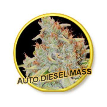 Auto Diesel Mass Mr Hide Seeds 01