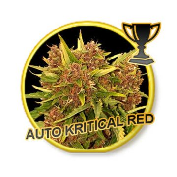 Auto Kritical Red Mr Hide Seeds 01