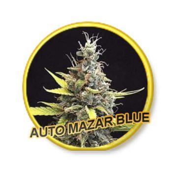 auto-mazar-blue–mr-hide-seeds-01