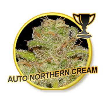 Auto Northern Cream Mr Hide Seeds 01