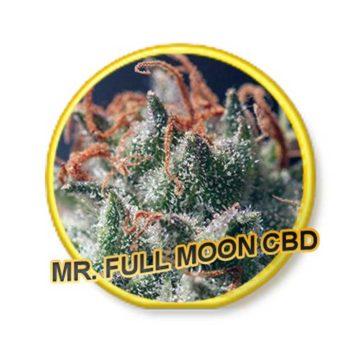 Full Moon Cbd Mr Hide Seeds 01