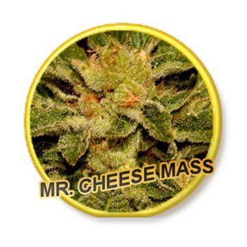 Mr Cheese Mass Mr Hide Seeds 01