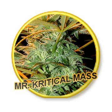 Mr Critical Mass Mr Hide Seeds 01