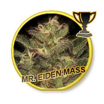 Mr Eiden Mass Mr Hide Seeds 01