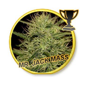 Mr Jack Mass Mr Hide Seeds 01