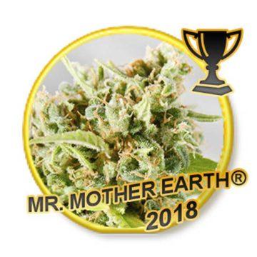 Mr Mother Earth Mr Hide Seeds 01