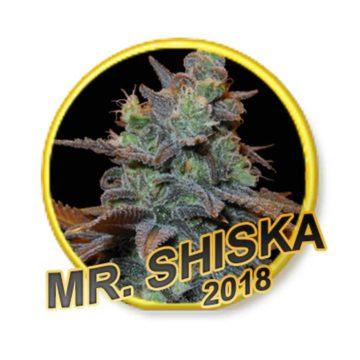 Mr Shiska Mr Hide Seeds 01