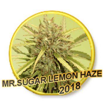 Mr Sugar Lemon Haze Mr Hide Seeds