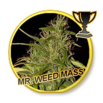 Mr Weed Mass Mr Hide Seeds 01