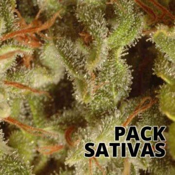 Sativa Champions Pack Semillas Marihuana Paradise Seeds