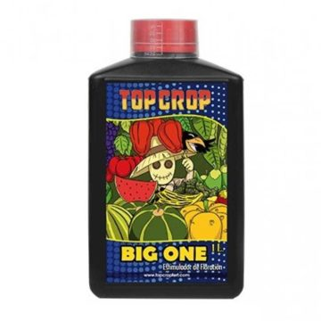 big-one–top-crop-1L
