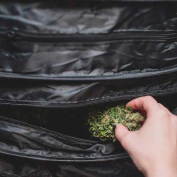 WeDryer-secadora_hierbas_cannabis_08