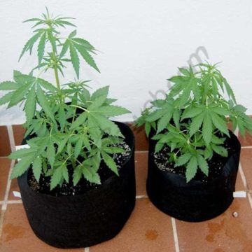 smart-pot-maceta-geotextil-cultivo_01