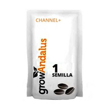 Channel+_1_semillas_granel