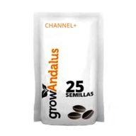 Channel+ semillas de marihuana a granel (25 semillas) | Grow Andalus