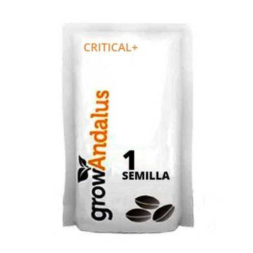 Critical+_1_semillas_granel