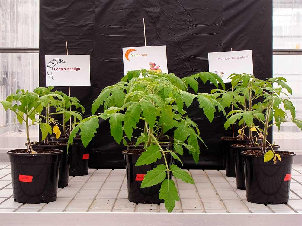 Mealfrass Grow Abono Escarabajo Organico Y Antiplagas 100 Bio Mealfrass 750 02