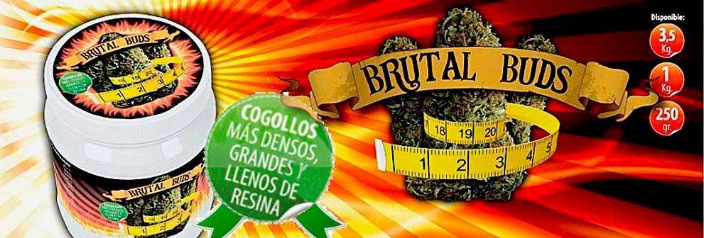 Brutal Buds Potenciador Floracion