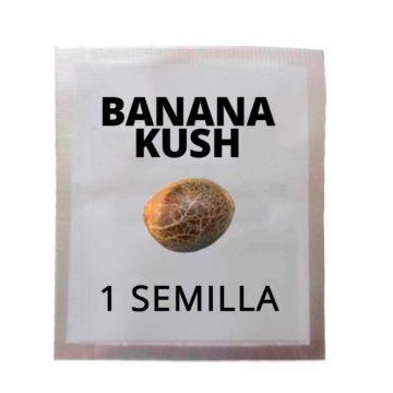 semilla_banana_kush