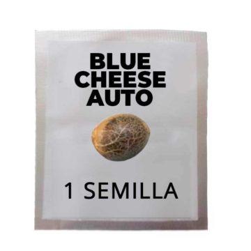 Semilla Regalo Blue Cheese Auto